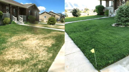 Before and After Eco Lawn Treatments